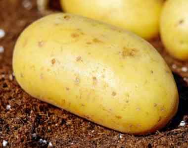 Una patata entera