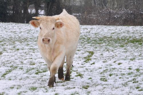 Poder beber leche marca la diferencia en periodos de escasez