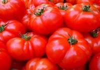 ¿Cuántas calorías tiene un tomate? ¿Importa?